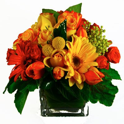 Daisy Splash Flower Arrangement | San Francisco Florist Since 1871 Free Bay Area and San Francisco Flower Delivery