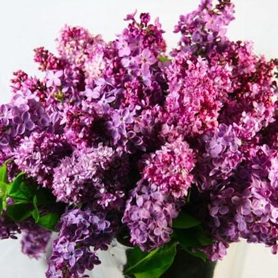 Sweet Scents of Lilacs Flower Arrangement