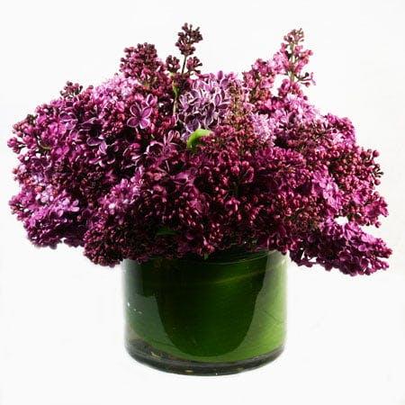Sweet Scents of Lilacs Too Flower Arrangement