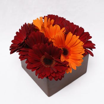 Daisies in a Row Flower Arrangement   San Francisco Florist Since 1871 Free Bay Area and San Francisco Flower Delivery