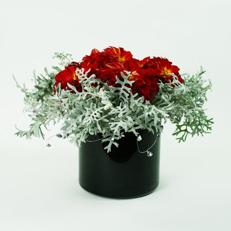 Frosted Dahlias Flower Arrangement