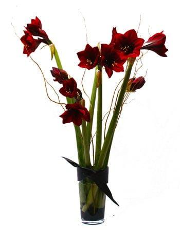 Tall Amaryllis Flower Arrangement