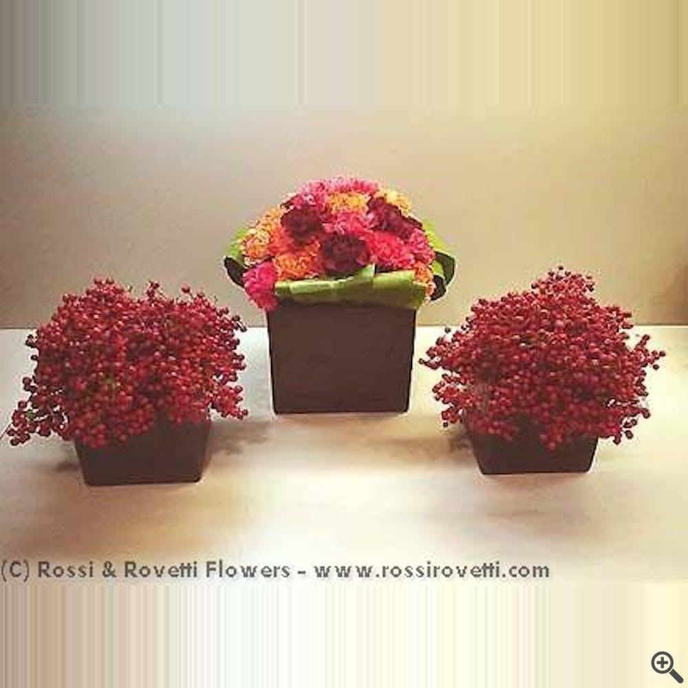 Carnation Berry Box Trio - Flower Arrangement