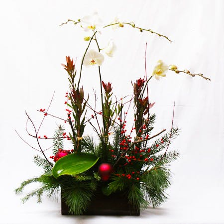 Seasonal Phalaenopsis Orchid Planter