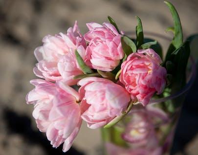 Strawberry Daiquiri Flower Arrangement