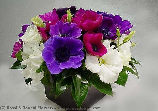 Vibrant Anemone Box - Flower Arrangement