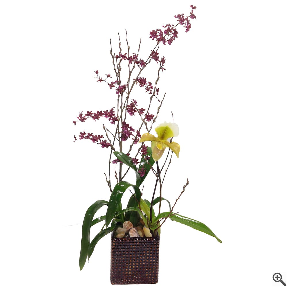 Paired Orchid Planter