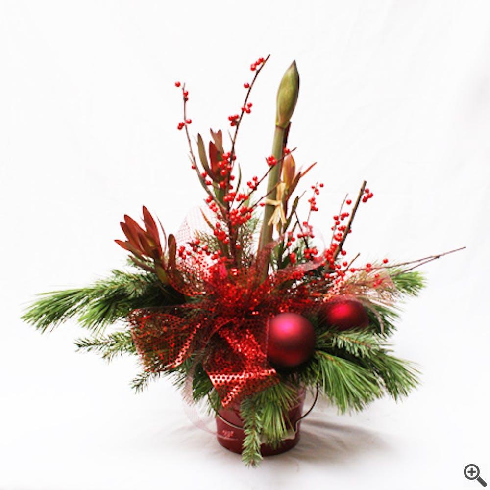Amaryllis Solitaire Flower Planter