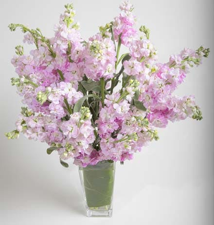 Simply Matthiola Flower Arrangement