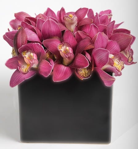 Simply Cymbidium Flower Arrangement | San Francisco Florist Since 1871 Free Bay Area and San Francisco Flower Delivery