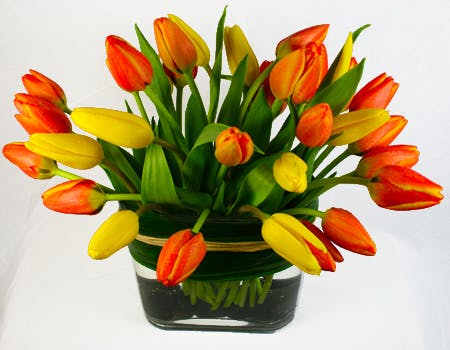 Tulips Roma Flower Arrangement