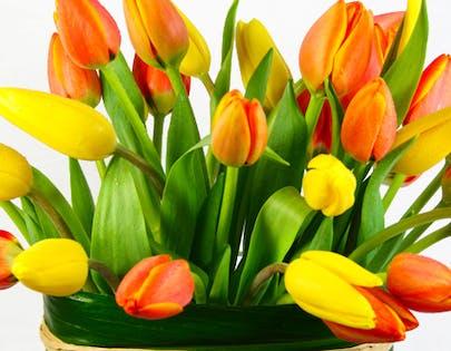 Tulips Roma Flower Arrangement