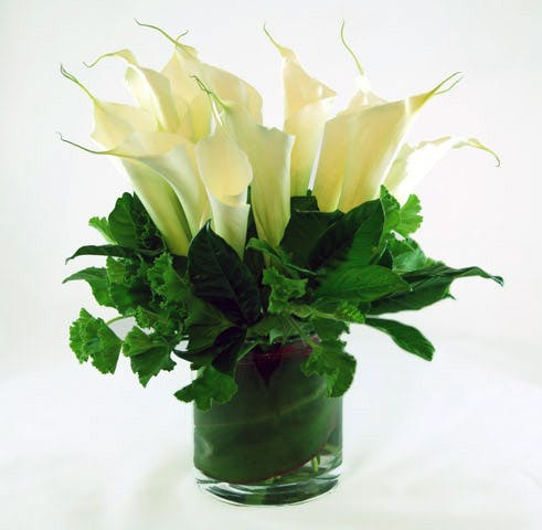 Calla Lily Esplosione Flower Arrangement | San Francisco Florist Since 1871 Free Bay Area and San Francisco Flower Delivery