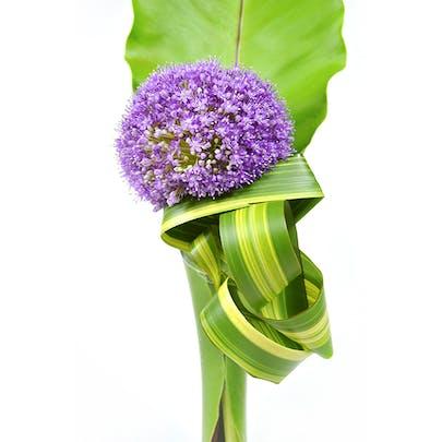 Lone Allium Flower Arrangement