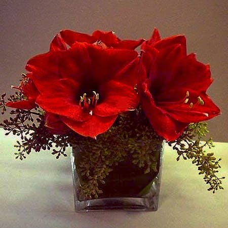 Holiday Red Amaryllis Flower Arrangement